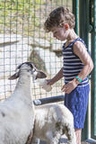Boy farmer feeding goats Royalty Free Stock Photos