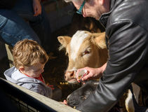 Boy Feeding Animals Stock Images