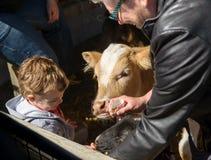Boy Feeding Animals Stock Images