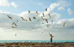Boy feeding birds. Young boy feeding the seagulls with his hand raised on.Picture taken on the shore in Nassau Bahamas Stock Photography
