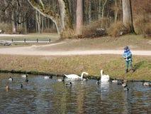 Boy feeding birds, Lithuania Stock Photo