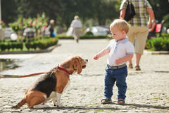 Boy is feeding the dog Royalty Free Stock Photos