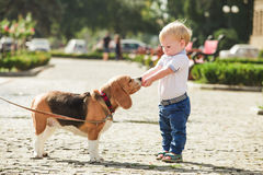 Boy is feeding the dog Stock Images