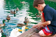Free Boy Feeding Ducks Stock Images - 3407964
