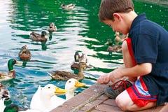 Boy Feeding Ducks stock images