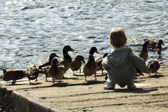 Boy feeding ducks Stock Photos