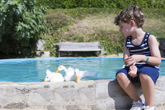Boy feeding ducks stock image