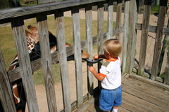 Boy feeding giraffe Stock Images