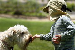 Boy feeding his dog. In a park Royalty Free Stock Images