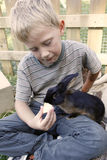 Boy feeding his pet rabbit Royalty Free Stock Photos