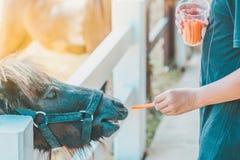Boy feeding horse in his farm through a white fence stock photo