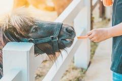 Boy feeding horse in his farm through a white fence. Boy feeding horse in his farm through a white wooden fence royalty free stock photos