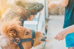 Boy feeding horse in his farm through a white fence royalty free stock image