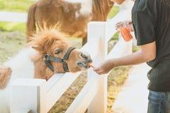 Boy feeding horse in his farm through a white fence royalty free stock photo
