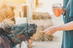 Boy feeding horse in his farm through a white fence. Boy feeding horse in his farm through a white wooden fence stock photography