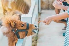 Boy feeding horse in his farm through a white fence royalty free stock photos