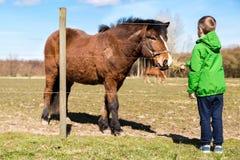 Boy feeding horse royalty free stock photo