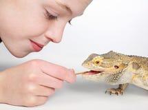 Boy feeding lizard. Closeup of little boy feeding a mealworm to pet lizard royalty free stock photo
