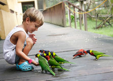 Boy feeding parrots in park Royalty Free Stock Photo