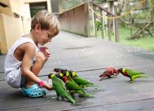 Boy feeding parrots in park Royalty Free Stock Photo