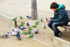Boy feeding parrots and pigeons Royalty Free Stock Images