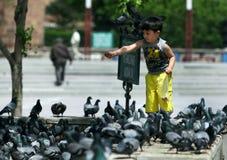 A boy feeding pigeons in Ankara in Turkey. Royalty Free Stock Photos