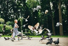Boy feeding pigeons birds in park Stock Photography