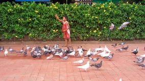 pigeon whisperer royalty free stock photo