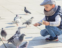 Boy feeding the pigeons Royalty Free Stock Images