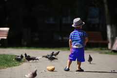 Boy feeding pigeons Royalty Free Stock Image