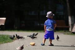 Boy feeding pigeons Royalty Free Stock Image