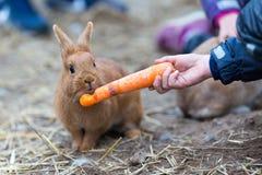 Boy feeding rabbit Royalty Free Stock Photos