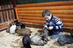 Boy feeding rabbits Stock Photos