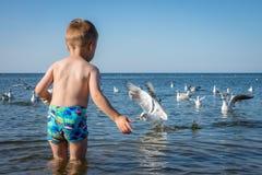 Boy feeding seagulls Royalty Free Stock Photography