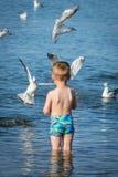 Boy feeding seagulls Stock Photography