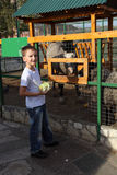 Boy feeds animals at the zoo Stock Images