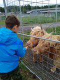 The boy feeds the animals in the zoo. stock images
