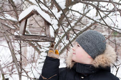 Boy feeds the birds in feeder in winter Royalty Free Stock Photography