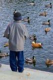 Boy feeds ducks. In park stock photos