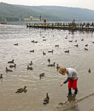 A Boy Feeds the Ducks at Coniston Royalty Free Stock Photos
