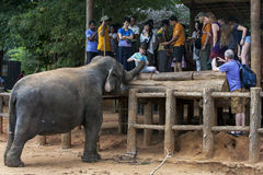A boy feeds an elephant at the Pinnawala Elephant Orphanage (Pinnawela)  in central Sri Lanka. A boy feeds fruit to an elephant at the Pinnawala Stock Photography