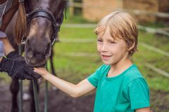 The boy feeds a horse from a palm royalty free stock photography