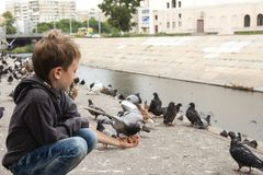 The boy feeds the insolent pigeon with a piece of bread from his royalty free stock photo