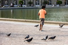 The boy feeds the pigeons in the Luxembourg Gardens. Paris, Fran. Paris, France - July 07, 2017: The boy feeds the pigeons in the Luxembourg Gardens Jardin du Stock Photos