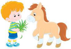 Boy feeds a pony Royalty Free Stock Images