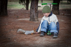 Boy feeds a squirrel from hands Royalty Free Stock Images
