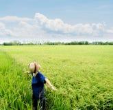 Boy feel good on rice field Stock Photography