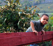 Boy on Fence Royalty Free Stock Images