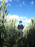 Boy in field Stock Image