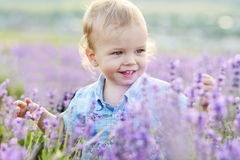 Boy in field Stock Images